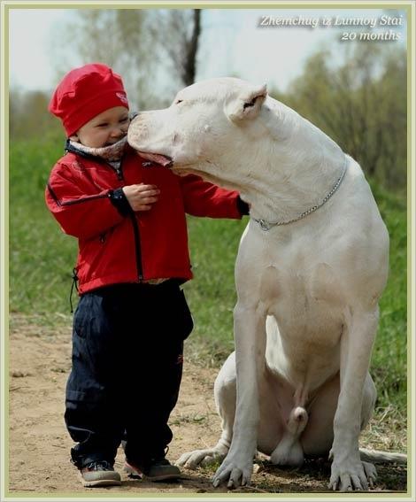 Wonderful Dogo Chubby Adorable Dog - a61b476832c552e9f82d603dd0204fb8--nanny-dog-big-dogs  Collection_319068  .jpg