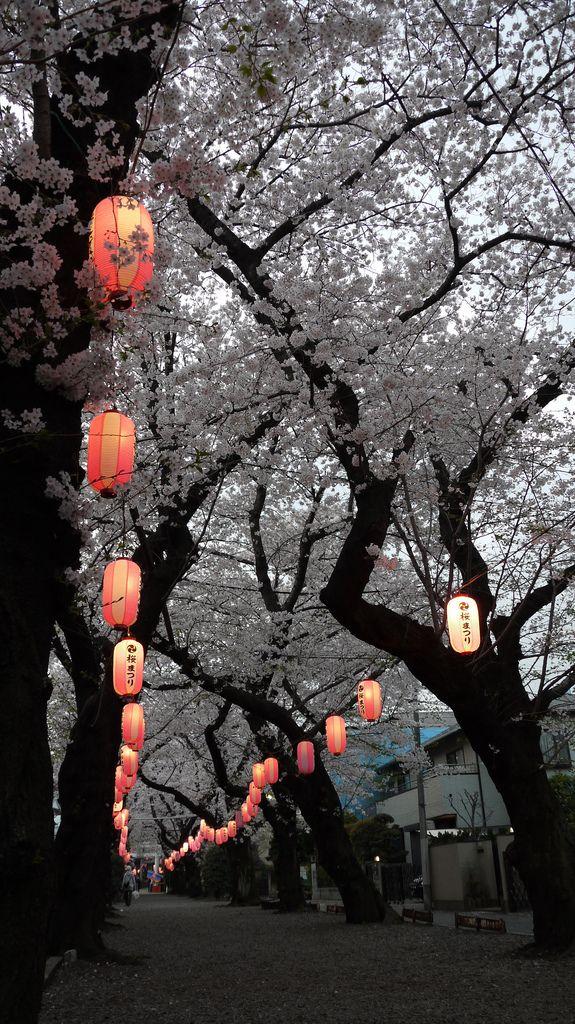 Sakura Matsuri - Cherry Blossom Festival, Japan..I must stay there longer next time to enjoy the flower