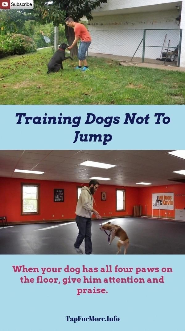 Stop Dog Jumping And Therapy Dog Training Check The Picture For