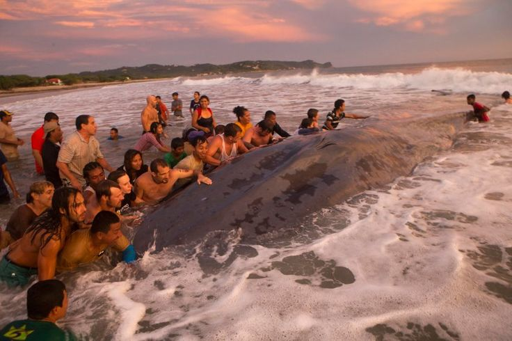 Helping a Humpback out.