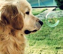 Golden Bubble Baby