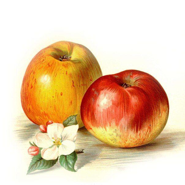картинки для декупажа яблоки ядерное