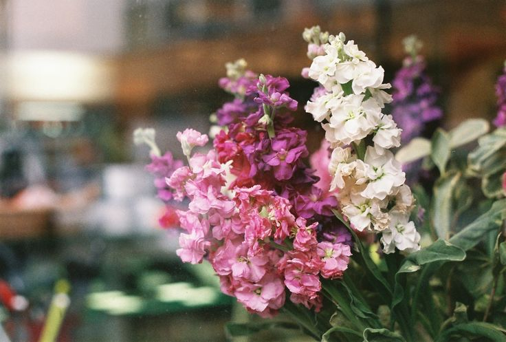 flower. - beautiful flowers in whitstable kent