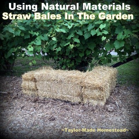 I use organic matter for mulch in my garden - often grass clippings or spent hay. But come see how a bale of straw does double duty! #TaylorMadeHomestead