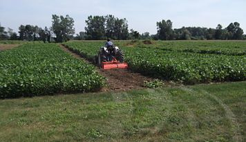 Blueberry Knoll Berry Farm--U-Pick Strawberries Available in June