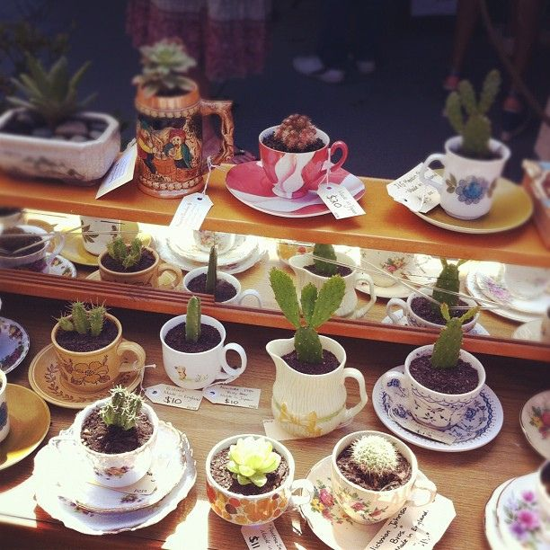 Cacti in teacups