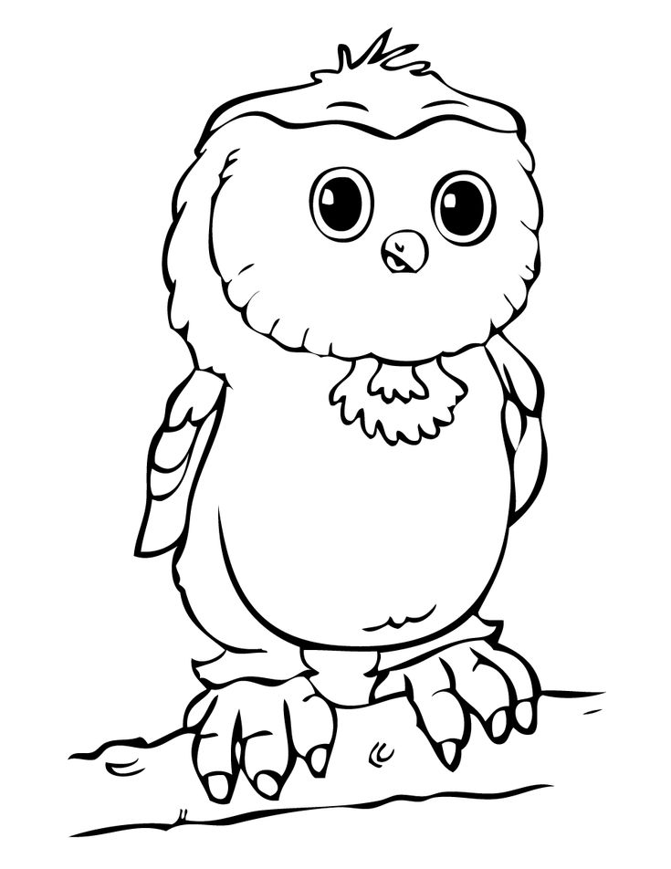 owl coloring pages printable owl coloring pages free owl coloring pages online owl - Free Colouring