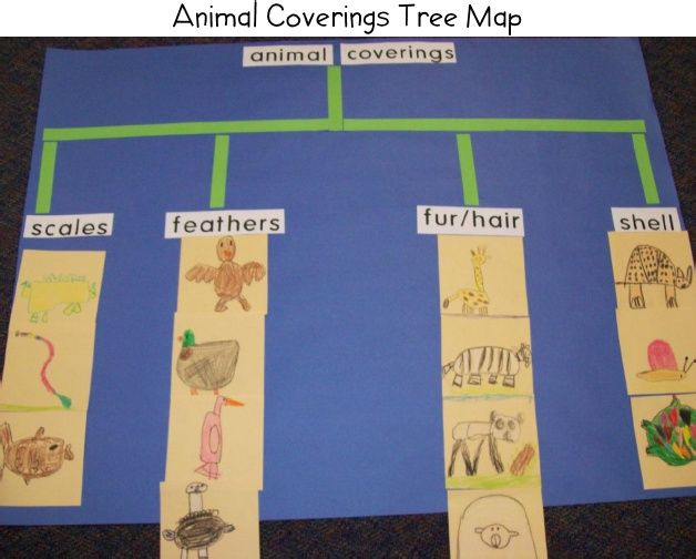 Tree Map- Animal coverings classification