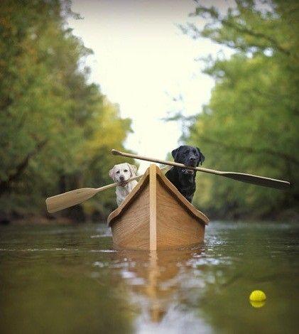 Fetching the tennis ball