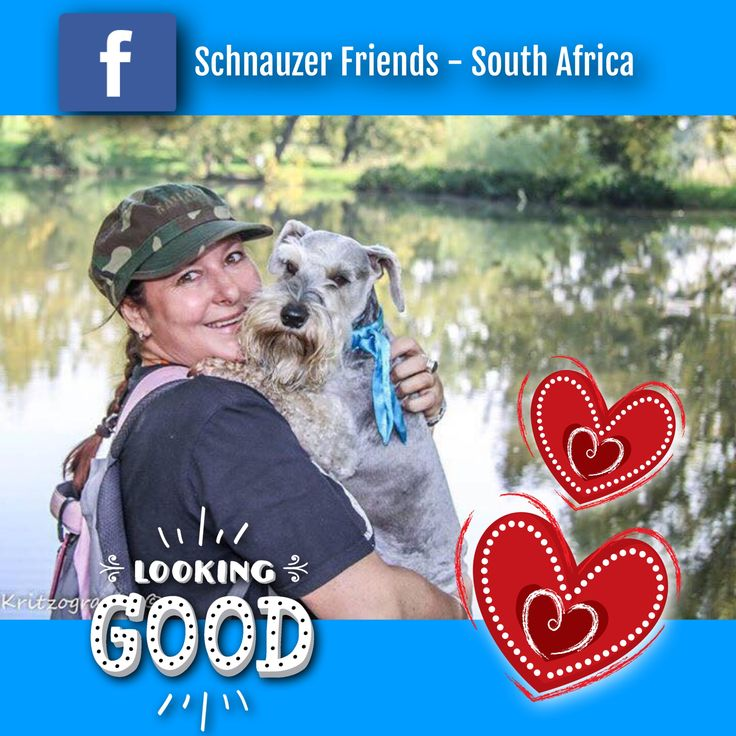 Max and I were voted best looking couple at today's Johannesburg Schnauzer Friends Fun Walk!