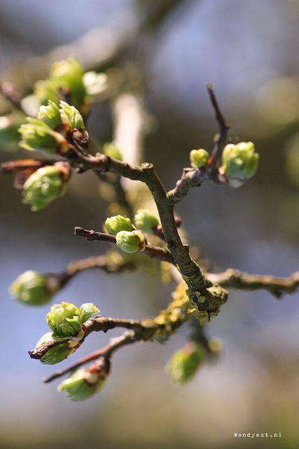 Lente aan de Ijssel | Wendyext.nl / Spring