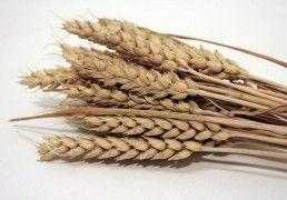 spighe di grano  - diy | www.kairos-shop.com
