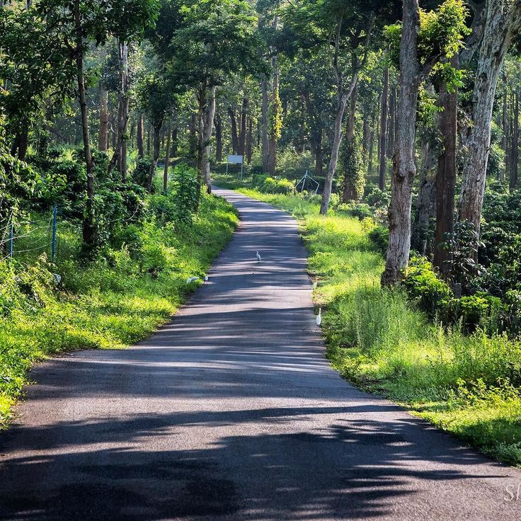 0630hrs / Polibetta / May2017. They said elephants were a certainty at this time. Adventure won over caution. I ventured out. I worried over what I need to do if an elephant turns up? Run. Climb. Hide. Stand still? No idea! Google was missed.  #forest #road #trail #green #monsoons #drive #adventure #trek #mornings #exploring #discover #walking #experiences #green #idyllic #Pollibetta #Coorg #Karnataka