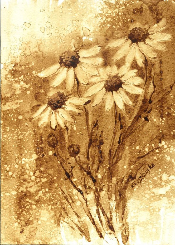 Rumianki - watercolour painted with coffee - Maria Roszkowska