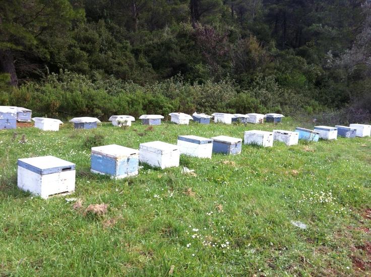 Stayia organic bee farming