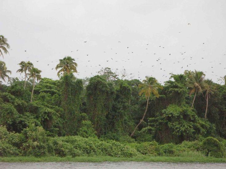 Птичий заповедник Кумараком (Kumarakom Bird Sanctuary) Кумараком Керала Индия - информация для туриста