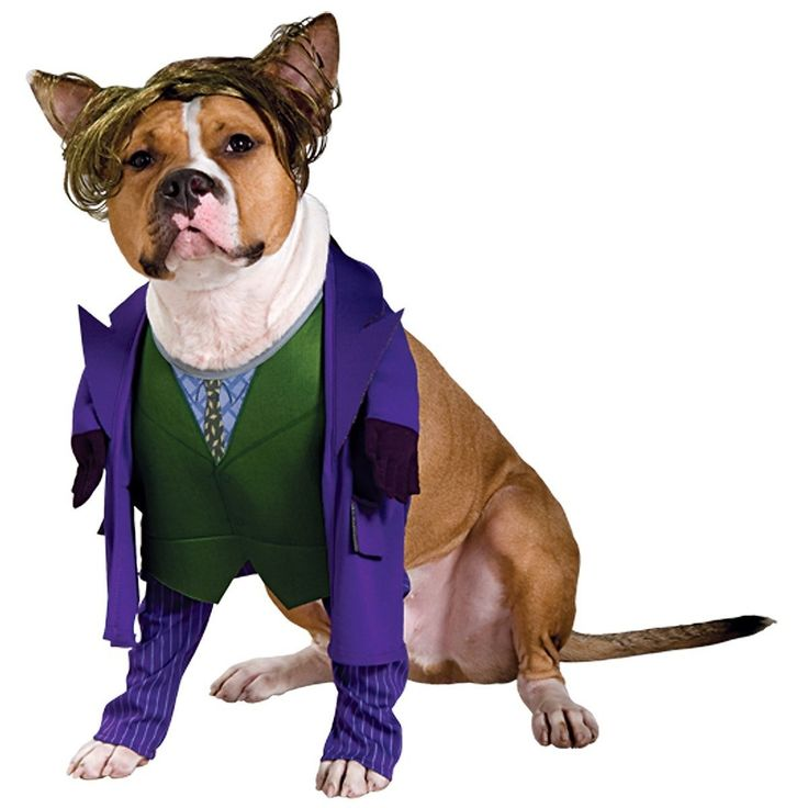 Best 25+ Large dog halloween costumes ideas on Pinterest ...