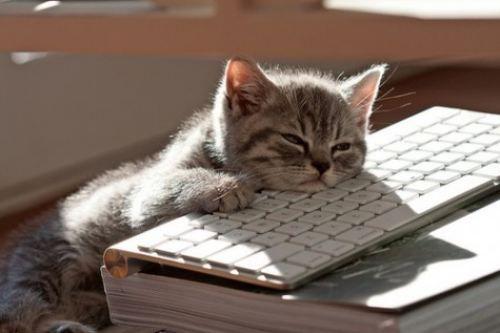 mew!: Computers, Cats Naps, Mondays, Cats Sleep, Mornings Coff, Naps Time, Kittens, Sweet Dream, Animal