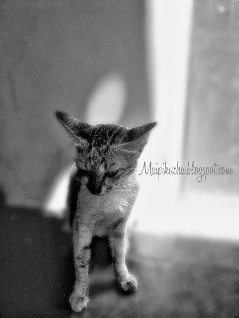 maipikucha: The Cats