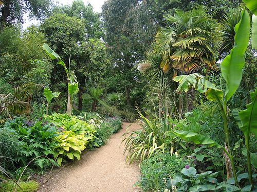 Tropical Garden Ideas Nz 30 best tropical gardens images on pinterest | tropical gardens