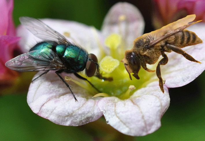 Спросил как-то комар муху: - Есть ли здесь в окрестности цветы?  - Насчет цветов ничего не знаю, — ответила ему муха. — А вот консервных банок, навоза, нечистот в канавах полным-полно. И муха начала перечислять комару все окрестные помойки, на которых ему непременно нужно побывать.  Полетел комар в указанном направлении и встретил по пути пчелу.  - Не видела ли ты в окрестностях какие-нибудь помойки? — спросил он у нее. - Помойки? Нет, нигде не видела, — удивилась пчела. — Зато здесь повсюду…