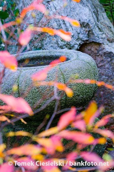 Detail from japanese garden