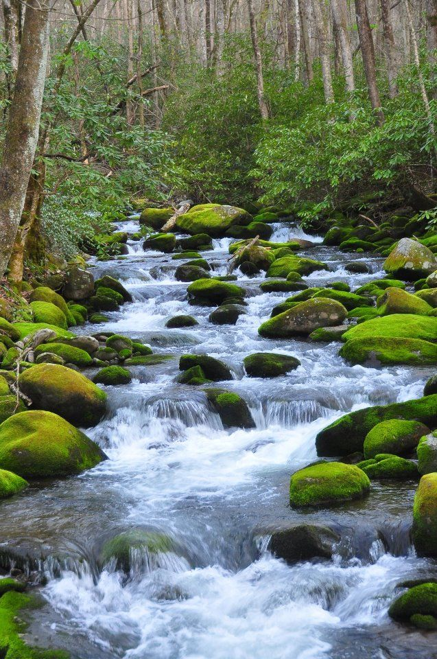 Take a dip in the rivers of the Smoky Mountains. Perfect mother  nature's white…