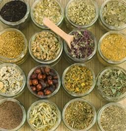 Herbal Apothecary 101: 12 essentials