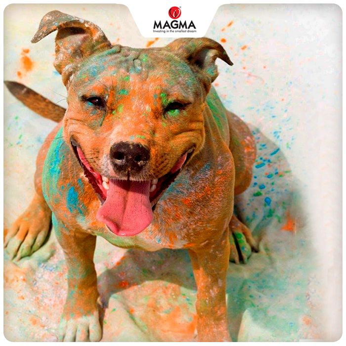 The #colours have chemicals which may cause skin irritation or allergy in pets. They may contain traces of leads, which acts as a slow poison. #Holi is not for them.  Magma wishes everyone a very happy and a safe Holi! #MagmaPQI