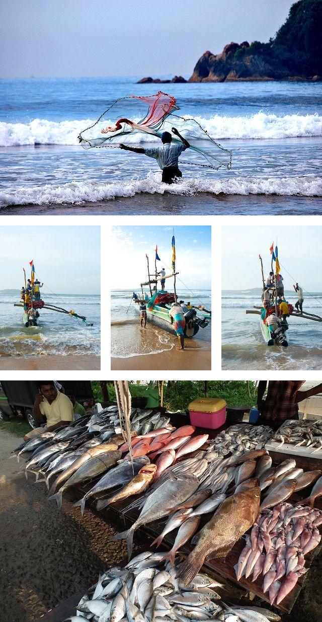 33 best stilt fishermen images on pinterest sri lanka for Sri lanka fishing