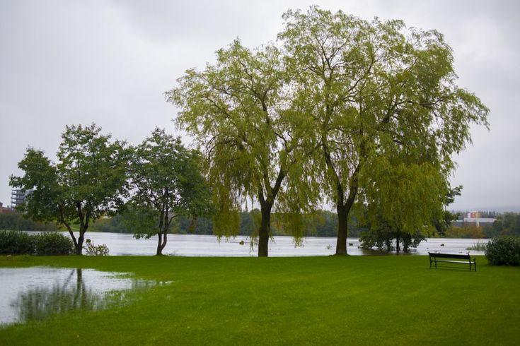 Wetland by Ole Morten Eyra