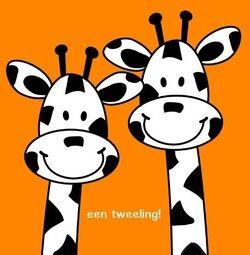 Tweeling geboortekaartje Giraffe in Oranje (en op verzoek: alle andere denkbare kleuren). De goedkoopste geboortekaartjes online ontwerpen en bestellen via http://www.geboortepost.nl/geboortekaartjes/tweeling/happy-giraffe-twins-on-orange-vk.html