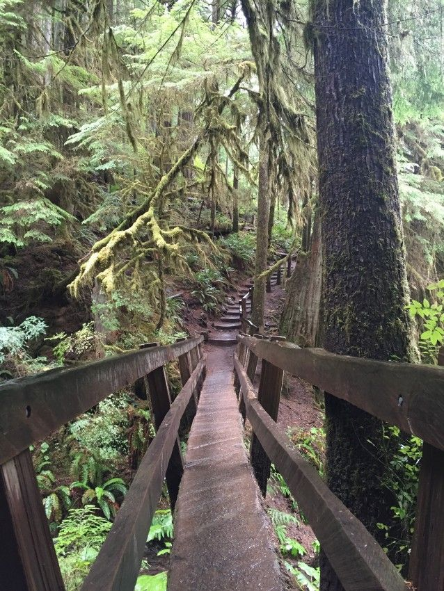 Marymere Falls Trail in Olympic National Park