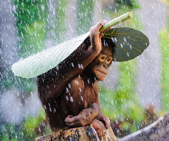 parapluie naturel.