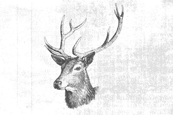 Textured Vintage Deer Vector by Offset on Creative Market