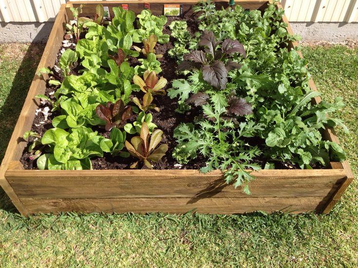 How To Make A Veg Garden