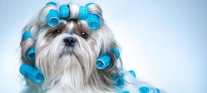 Quieres que tu mascota quede guapa guapa!!!???   Pues ven a HAPPY MASCOTAS y tráela a nuestra peluquería canina... tenemos los precios más bajos de toda la provincia de Alicante... estamos en el Polígono de Babel!!!