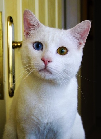 Ankara, Turkey (kedi) - a photo by mustafa taşkın