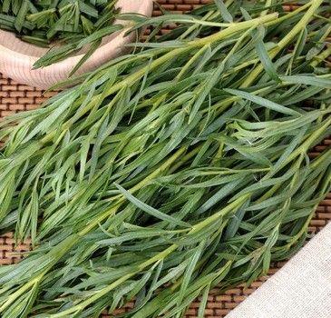Plantes aromatiques pour salades estragon pimprenelle for Plantes aromatiques