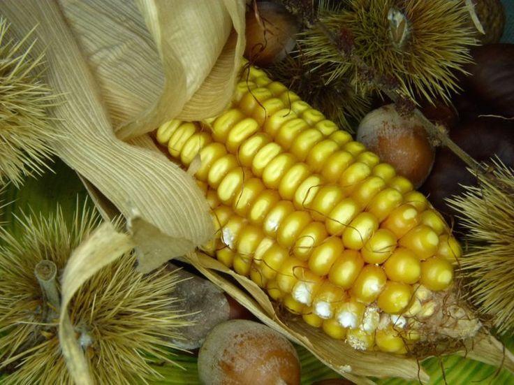 Apoio à sustentação do preço do milho no Centro-Oeste é 100% negociado - http://po.st/EqRitf  #Setores - #Conab, #Leilão, #Milho