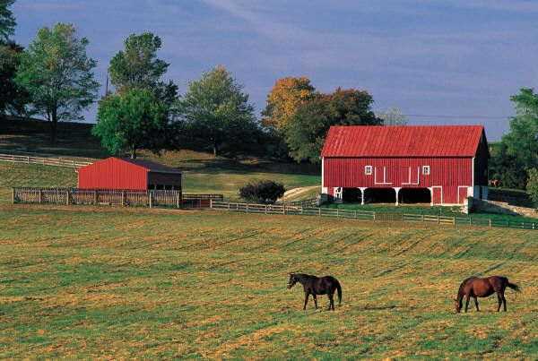 Start your dream farm through government grant money.  http://www.homesteadingfreedom.com/government-grant-money-for-starting-a-farm/