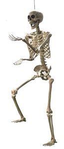 Life-Sized Posable Skeleton 5ft - 329226 | trendyhalloween.com