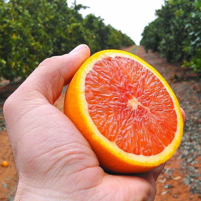 Fresh navel oranges from the Arnold family at Fresh Citrus Direct (@Citrus_Direct). See their stall in the link in our bio.  #FreshCitrusDirect, #FarmersMarket, #FarmhouseAU, #Foodie, #Orchard, #Australia, #Riverland, #SouthAustralia, #Oranges, #NavelOranges.