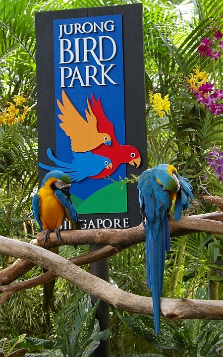 """""""Jurong BirdPark"""" is possibly the world's best bird-zoo (with the largest number of birds) and undoubtedly one of Singapore's top attractions !"""