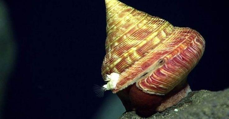 Segundo cientistas, esta lesma-do-mar é o provavelmente parte de uma nova espécie