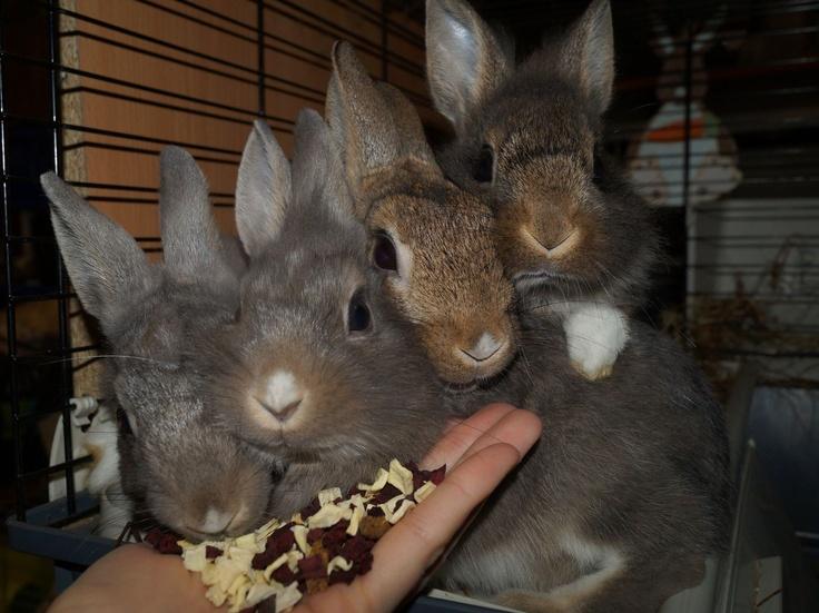 Nesquik, Kangus, Chocapic and Cheerios
