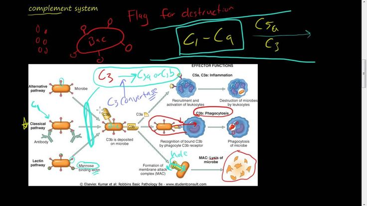 #27 - Chemicals of Inflammation - Plasma protein - Complement System, C3, C3a, C5, C5a