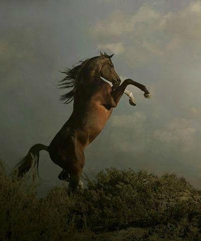 arap atları ile ilgili görsel sonucu