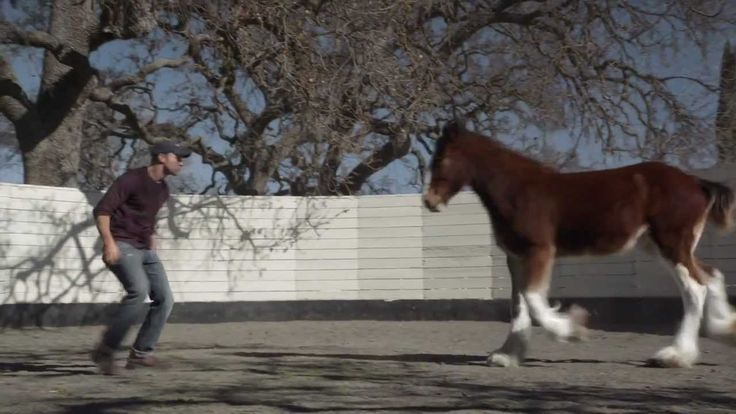 """HD Clydesdales 2013 Budweiser Super Bowl Ad — Extended Version of """"Brotherhood."""" Apparently Budweiser's goal is to make me cry every Super Bowl. Mission accomplished."""