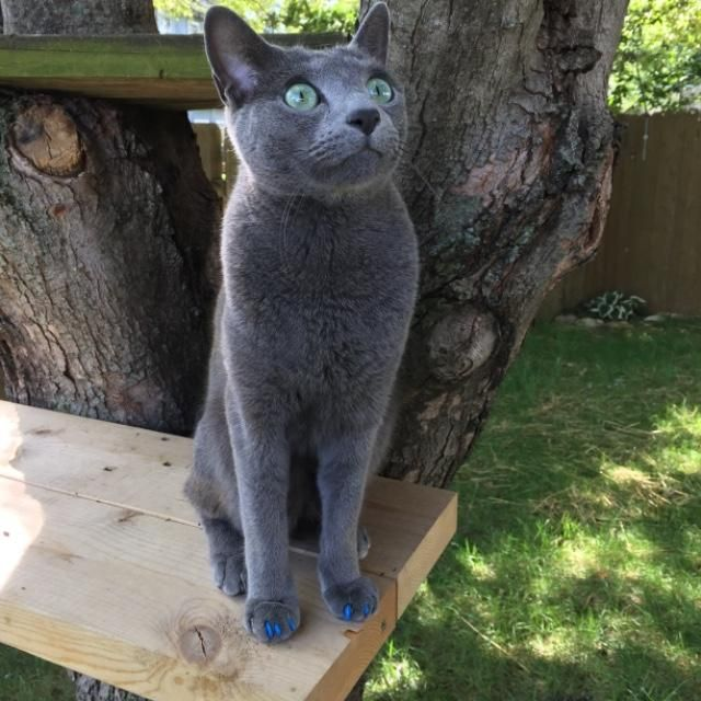 Best 25 Cat Fence Ideas On Pinterest Enclosure